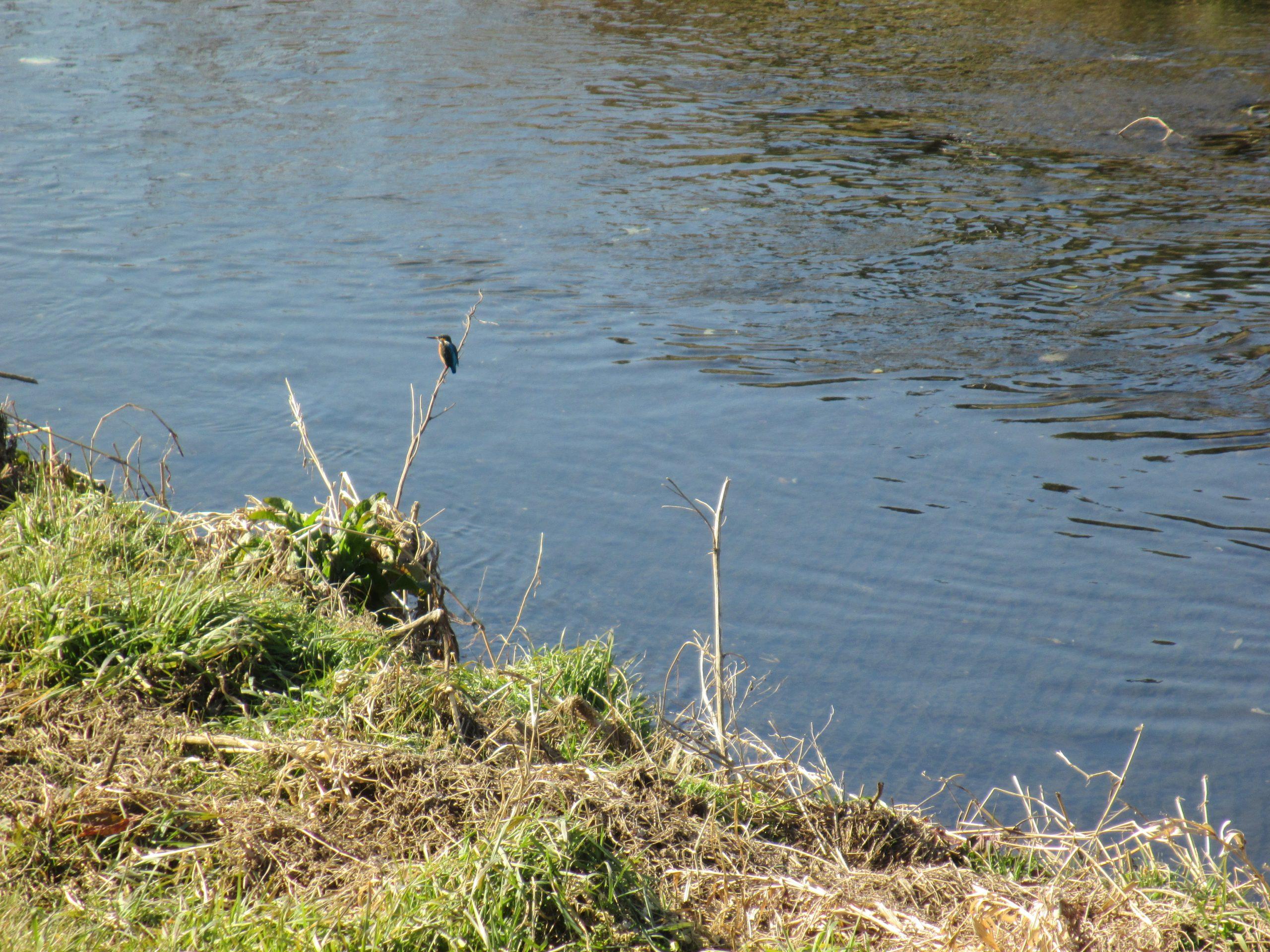 川沿い写真